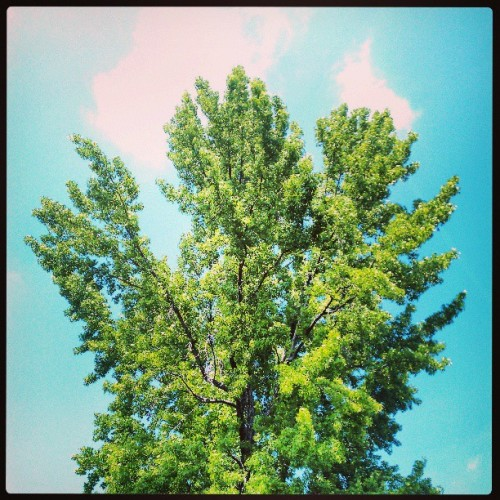 #tree #nature #theworldismyplayground