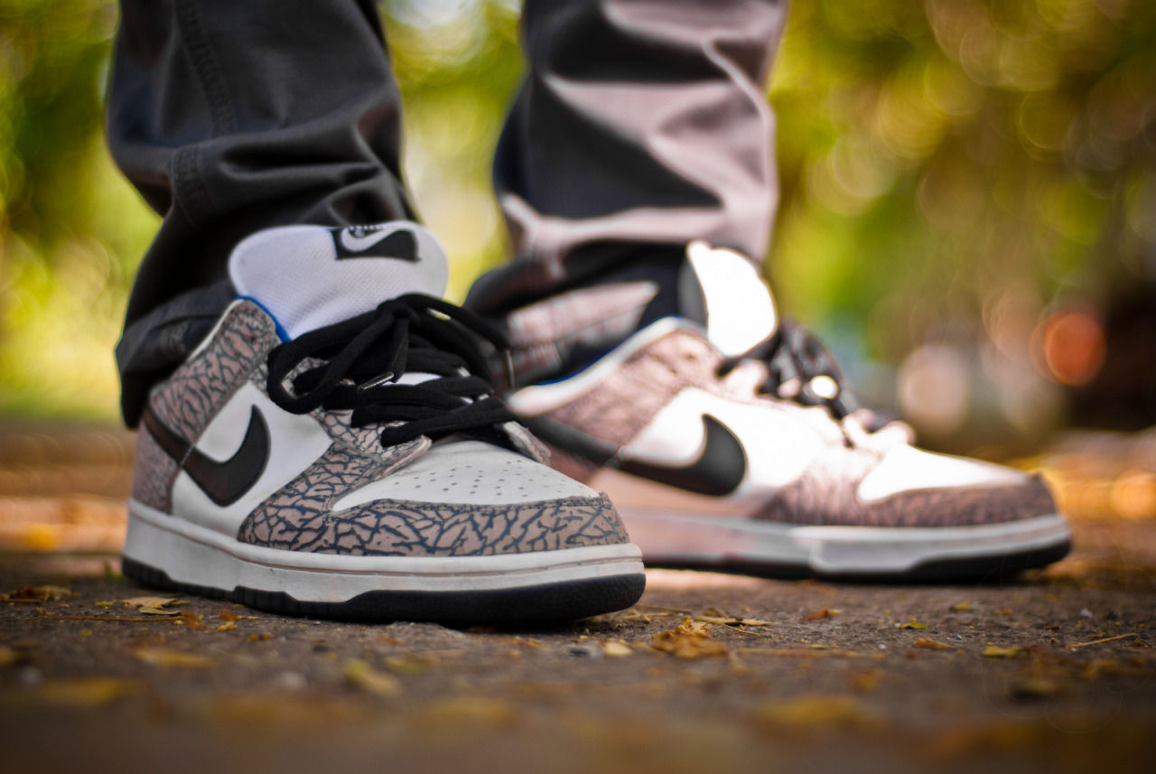 sweetsoles:  Supreme x Nike Dunk Low SB White/Cement (by whoretaleza)
