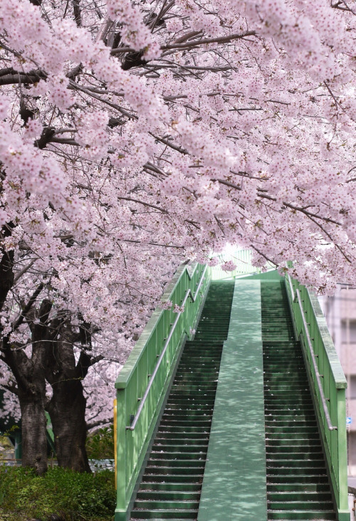 ethertune:  steps to SAKURA (By teeco55)