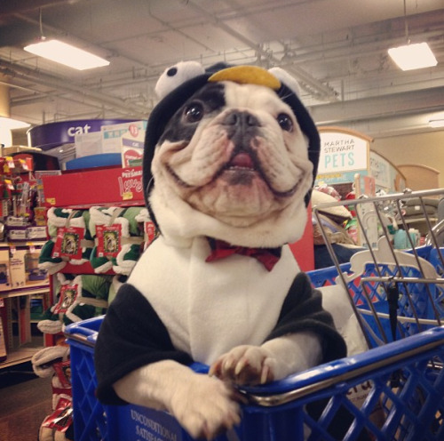 Manny the French bulldog goes shopping in a penguin suit. Your argument is invalid.