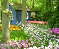 universeflower:  Dream house