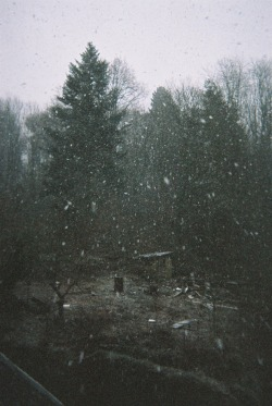 phorests:  pine—forest:  ☮winter indie nature grunge vintage❅