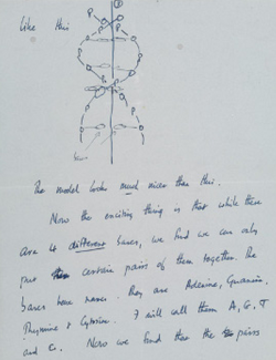 "jtotheizzoe:  Francis Crick's letter to his 12-year-old son Michael announcing the discovery of DNA's double-helix structure 60 years ago this week. More at The New York Times. ""Dear Michael, Jim Watson and I have probably made a most important discovery. We have built a model for the structure of de-oxy-ribose-nucleic-acid (read it carefully) called D.N.A. You may remember that the genes of the chromosomes – which carry the hereditary factors – are made up of protein and D.N.A.  Our structure is very beautiful… Now we believe that the D.N.A. is a code.  That is, the order of the bases (the letters) makes one gene different from another gene (just as one page of print is different from another)… In other words we think we have found the basic copying mechanism by which life comes from life.  You can understand that we are very excited. Read this carefully so that you understand it. When you come home we will show you the model. Lots of love, Daddy."" It will be auctioned off by Christie's in April."