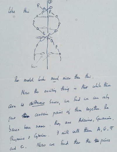 "Francis Crick's letter to his 12-year-old son Michael announcing the discovery of DNA's double-helix structure 60 years ago this week. More at The New York Times. ""Dear Michael, Jim Watson and I have probably made a most important discovery. We have built a model for the structure of de-oxy-ribose-nucleic-acid (read it carefully) called D.N.A. You may remember that the genes of the chromosomes – which carry the hereditary factors – are made up of protein and D.N.A.  Our structure is very beautiful… Now we believe that the D.N.A. is a code.  That is, the order of the bases (the letters) makes one gene different from another gene (just as one page of print is different from another)… In other words we think we have found the basic copying mechanism by which life comes from life.  You can understand that we are very excited. Read this carefully so that you understand it. When you come home we will show you the model. Lots of love, Daddy."" It will be auctioned off by Christie's in April."