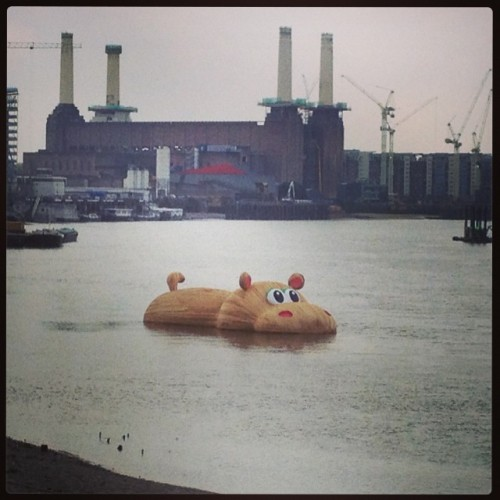 I saw a giant hippo in the River Thames at lunchtime!