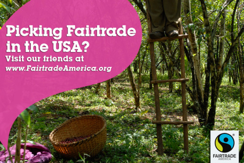 Like your coffee? Like it Fairtrade? Then keep up with our friends at  www.fairtradeamerica.org! Fairtrade America is the new organization representing the international Fairtrade system in the USA. Share this picture & follow along! In this photo: Birhanu Kabeto, a member of the Fero Cooperative in YIrgalem, Ethiopia, drops coffee cherries into his basket.