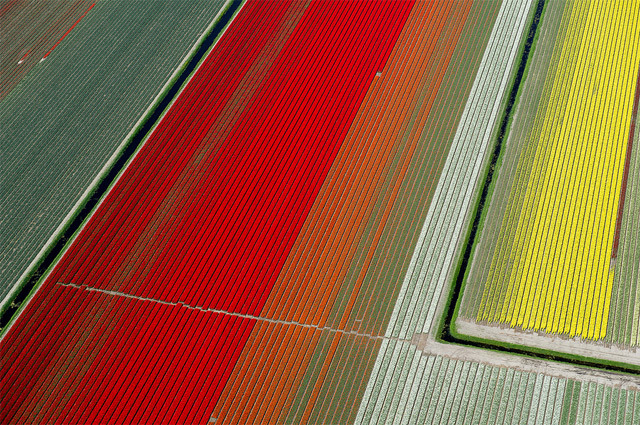 devidsketchbook:  Aerial Photographs of Tulip Fields in the Netherlands by Normann Szkop Abstract rainbows of color fill the landscape in these beautiful photos by French photographer Normann Szkop who hopped in a Cesna with pilot Claython Pender to soar above the tulip fields in Anna Paulowna, a town in North Holland. [via: thisiscolossal]