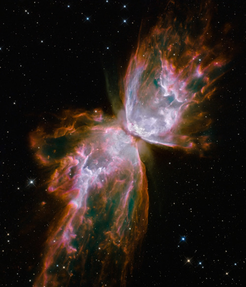 astronomy-picture-of-the-day:  Butterfly Emerges from Stellar Demise in Planetary Nebula NGC 6302 Gas released by a dying star races across space at more than 600,000 miles an hour, forming the delicate shape of a celestial butterfly. This nebula is also known as NGC 6302 or the Bug Nebula.