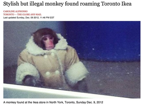 Ikea Monkey: Best News Story of 2012 Lookin' good, Ikea Monkey. But how did this happen?