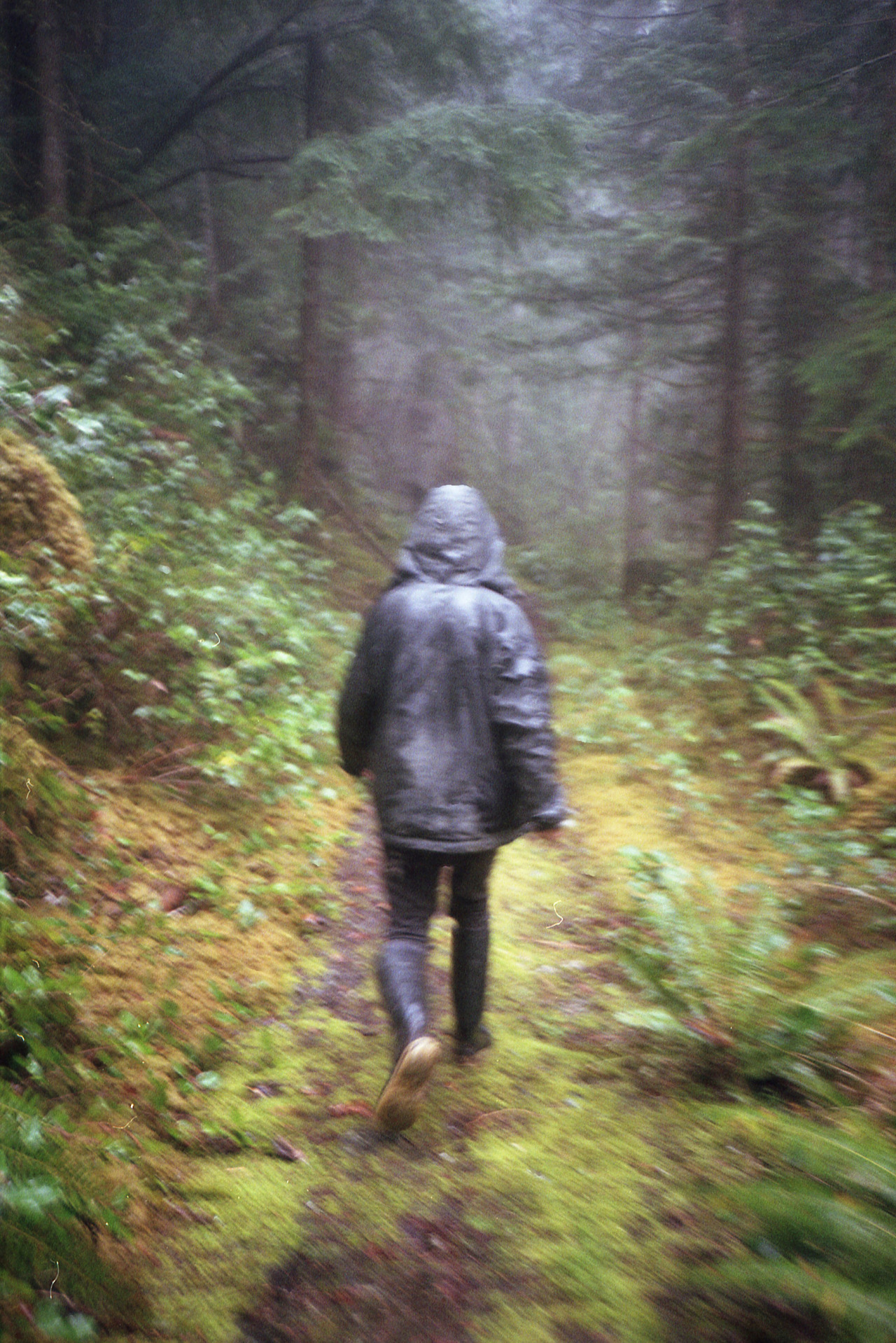 liferoom:  foggy forest paths   LIFE.