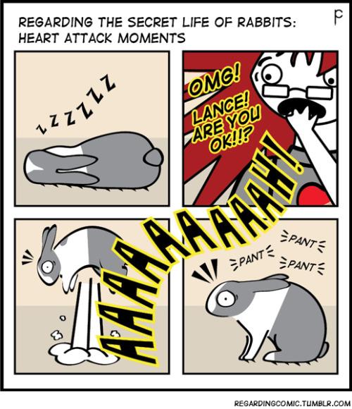 rabbits bunny bunnies houserabbits heart attack sleep scared regardingcomic raging bunnies Penny Collins dailyrabbit dailybunny