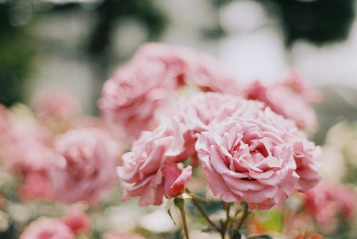 gildings:  untitled by nijntjee on Flickr.