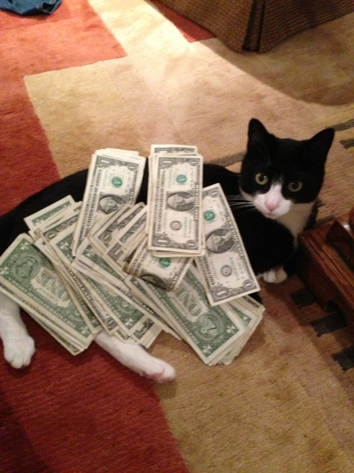 alexandrahart:  Cash cat  i'm glad to see that Alex is keeping Mina in the way to which she is accustomed