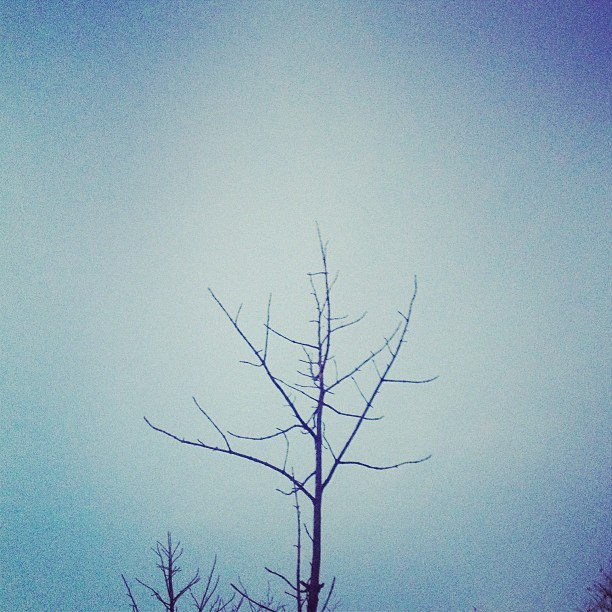Lonely tree friends  (at Banerghatta National Park)