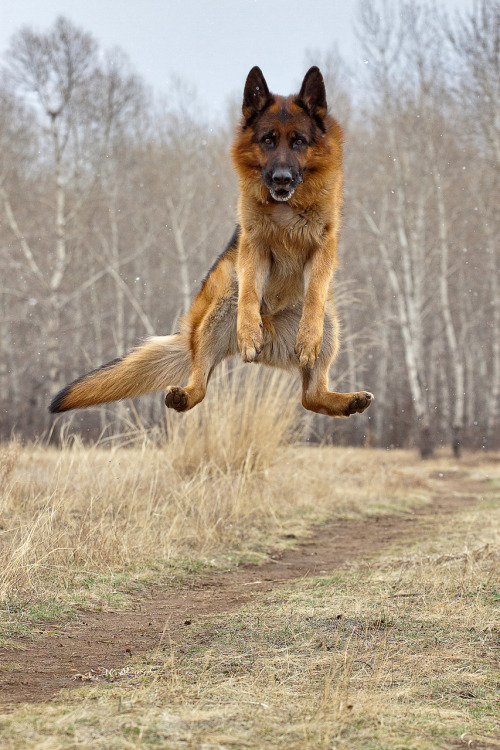 magicalnaturetour:  Brais1 ~ Jumping for joy! :)