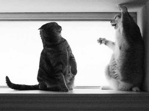 "catsinblackandwhite:  ""I'm serious, it was this big!"" by Kevin Steele on Flickr."