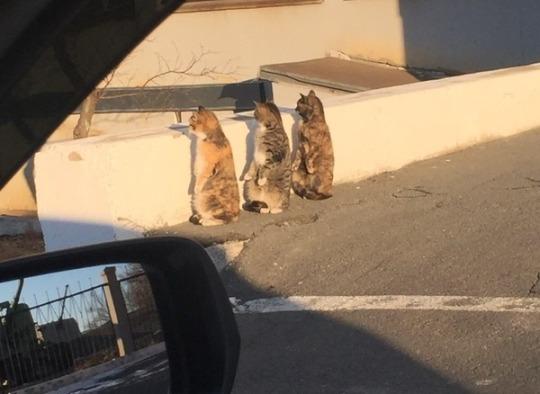 cat 966 loader 366