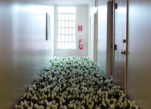 showslow:  Bloom - 28,000 Potted Flowers Installed at the Massachusetts Mental Health Center by Anna Schuleit
