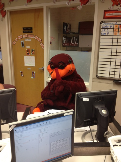 virginiatech:  Look who stopped by the student calling center last week on reading day! Even as they prepared for final exams, our student callers were hard at work reaching out to alumni, parents, their fellow students, and friends of Virginia Tech to share with them the importance of investing in higher education. We're not sure how many calls the HokieBird was actually able to make because, as any Hokie knows, the HokieBird doesn't talk. Thanks for stopping by, HokieBird!  Oh HokieBird, you so CRAZY!
