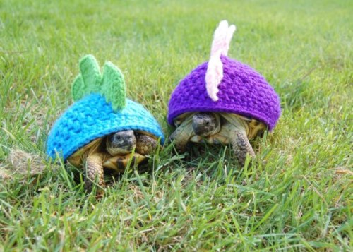 hats 4 turtle shells; so cute…