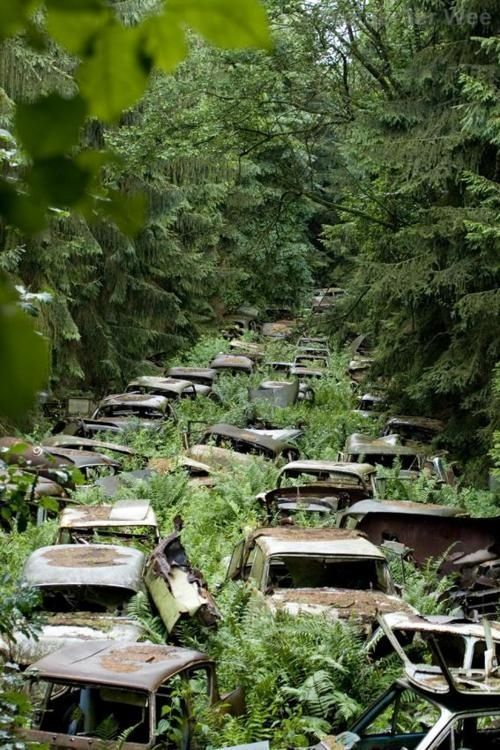 capturethisworld:  These abandoned cars (in Châtillon, Belgium) once belonged to American service men. After the war, they were responsible for shipping their vehicles back. Many of them could not afford to do this, so the cars were brought to a clearing in the forest, parked and left there. (via Green Renaissance)