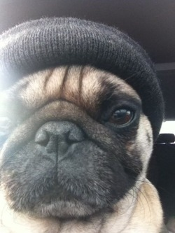 'New beanie, feelin fresh but mad work to do tonight..'