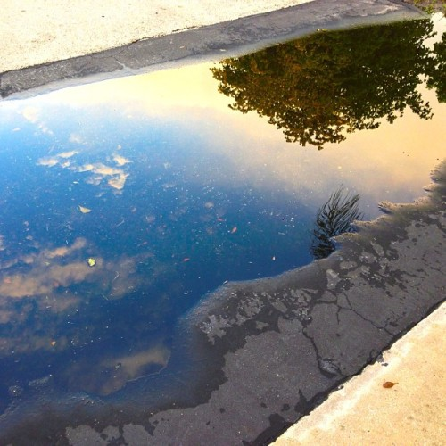 Change your perspective on how you look at things and reflect. #Puddle #Reflection
