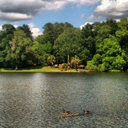 So, so glad to be #home. #babyducks #nofilter #lake #tallahassee #florida #summer #nature #beautifulday #finally