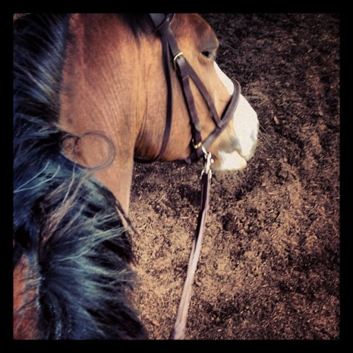 """Cowgirl Up"" I'm #UpInTheAir w/ #Alibi 🐎 For the first time…Yee Haw!! #Jphotography"