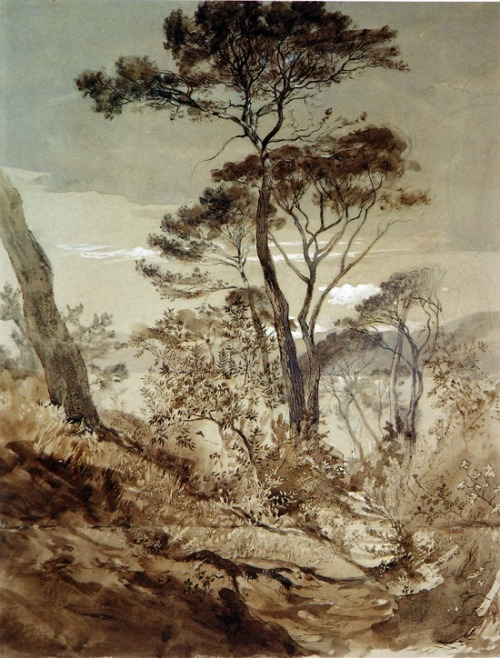 petitpoulailler:  themagicfarawayttree: 1845 John Ruskin (English Victorian art critic, art patron, draughtsman, watercolourist, a prominent social thinker, philanthropist) ~  Stone Pines at Sestri