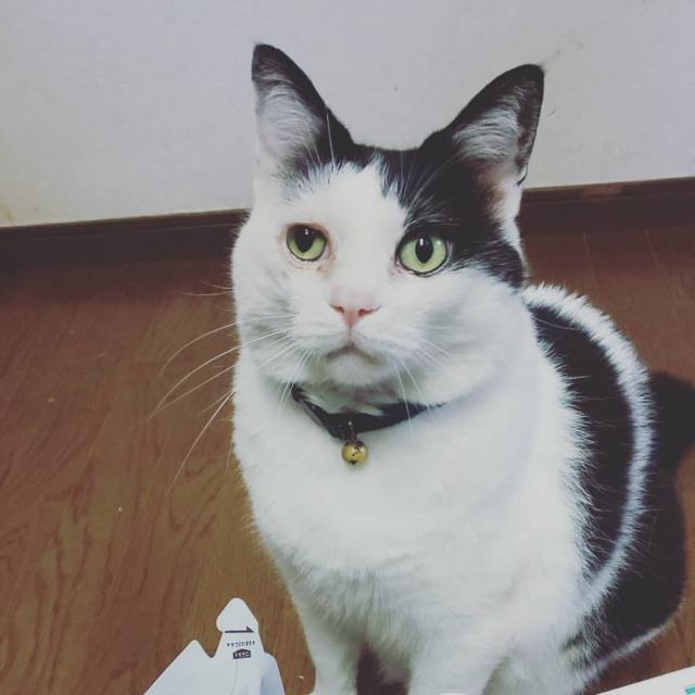 今週の配達。 冷凍庫、本日満員御礼なり。 #グリーンコープ #greencoop  #今週の配達 #生協商品 #産直びん牛乳 #産直たまご  #予約がお得 #せっけん派生協  #ねこ #ネコ #猫 #cat #catstagram #catstagram_japan  #ねこいる #ねこがいる生活  #はちわれ #はちわれ部 #牛柄猫  #ちまちゃん #ちまねこ #ちま https://www.instagram.com/p/CQbLciXBlJJ/?utm_medium=tumblr #グリーンコープ#greencoop#今週の配達#生協商品#産直びん牛乳#産直たまご#予約がお得#せっけん派生協#ねこ#ネコ#猫#cat#catstagram#catstagram_japan#ねこいる#ねこがいる生活#はちわれ#はちわれ部#牛柄猫#ちまちゃん#ちまねこ#ちま
