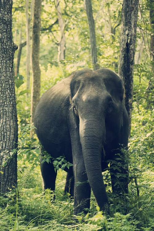 mystic-revelations:  Happy Ganesh Chaturthi (by VinothChandar)