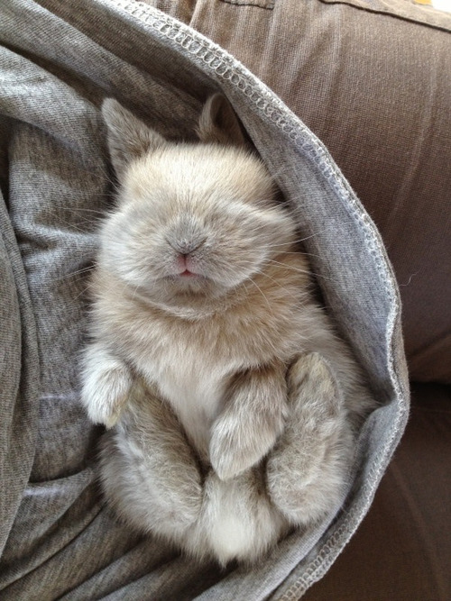 today would be so much better if i had a bunny in my lap.
