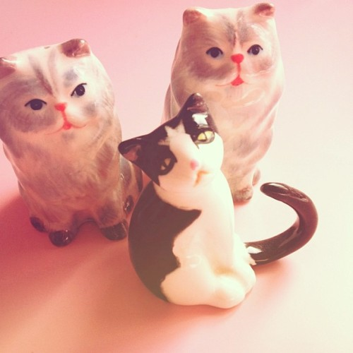 kawaii-factory:  cat cat cat