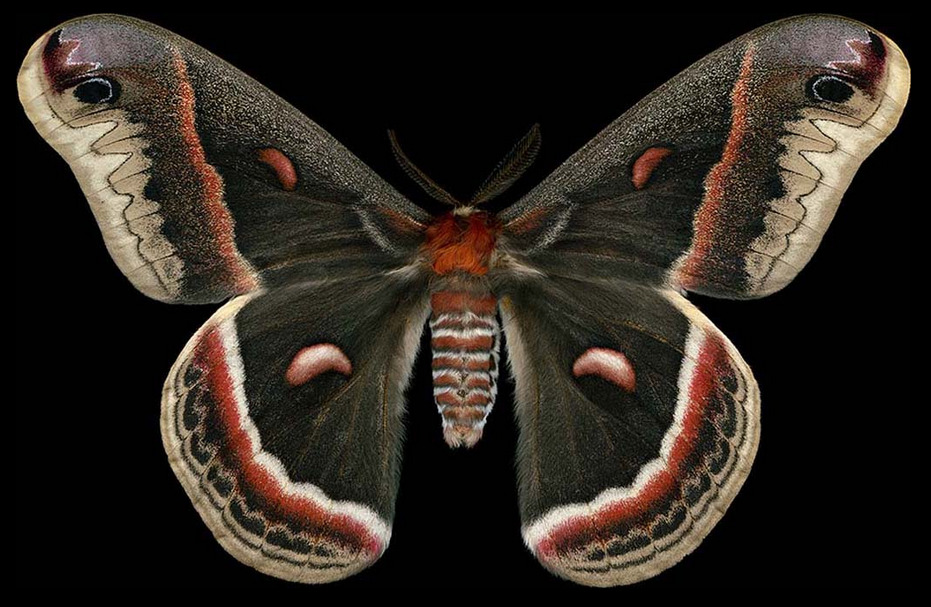 ex0skeletal:  Winged Tapestries: Moths at Large, a special exhibition of oversized prints by Canadian artist Jim des Rivière