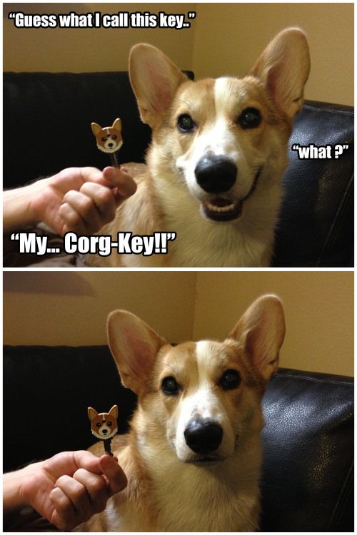 corgnelius:  Aw come on, Corgnelius! That was gold!  looooolllll