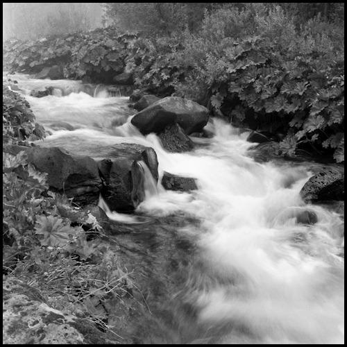 McCloud River Shasta-Trinity National Forest - California Yashica Mat 124G + Rollei 400 IR STD _ no filter Photography by Harry Snowden Posted for my friends at: The Weekend in Black and White…the new home for Monochrome Maniacs  If you enjoyed this image, you might also like…  The Stone Mother at Sunset - Pyramid Lake, Nevada