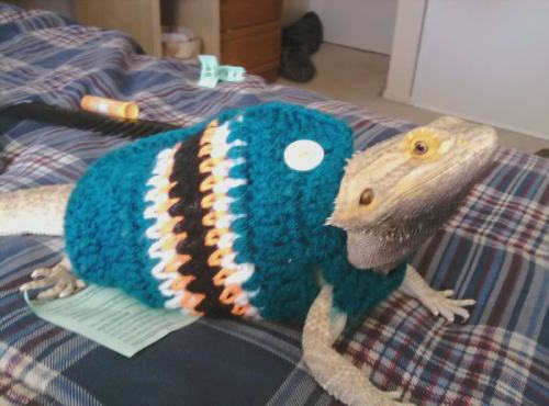 animalsweatervests:  How to Train Your (Bearded) Dragon (to Dress Appropriately for Fall Weather)
