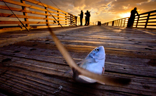A fish flops on the Lake Worth Pier as fishermen return on November 9, 2012 after the pier was closed for two weeks from damage caused by Hurricane Sandy. (Lannis Waters/The Palm Beach Post/Associated Press) (via Shadow and light - The Big Picture - Boston.com)