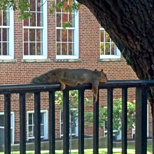Even the squirrels are tired from finals 🌰 – View on Path.