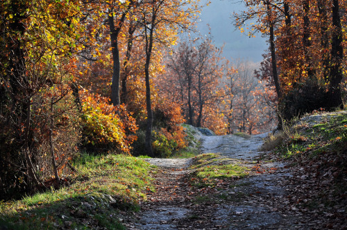 landscapelifescape:  San Lazzaro di Savena, Italy A road in the wood (by pierluigi maria)