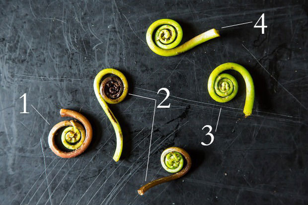 food52:  Fiddlehead ferns are one of spring's treats. Learn how to safely prepare them, and pick some up tonight! Read more: Fiddlehead Fern: A Controversial Coil on Food52  It's not Maine unless you buy some of these from a truck on the side of the road.