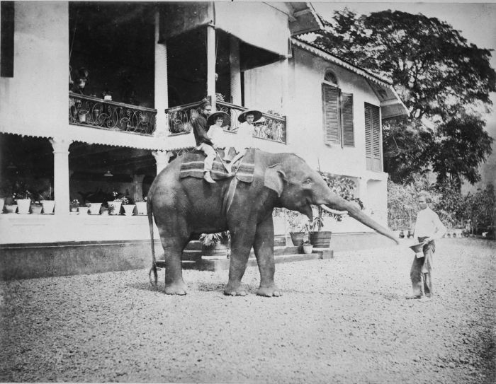seahorsesandpearls:  Children riding an elephant in front of the house of Europeans at a plantation, Dutch East Indies c. 1880s