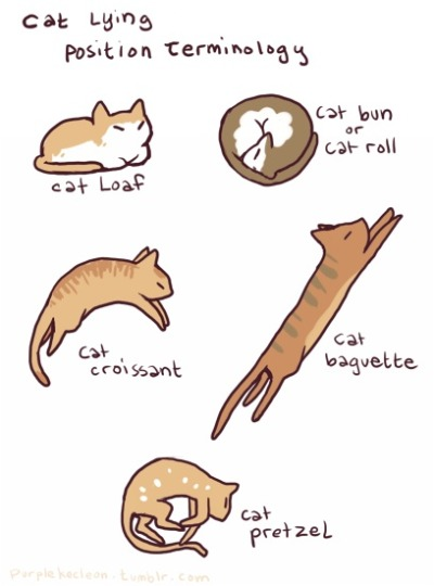 mrscreepshow:  Fact: cats are made of carbohydrates.