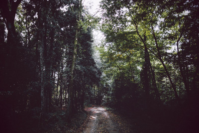 elenamorelli:  { into the forest // darkness and light and bokeh }-october edition-