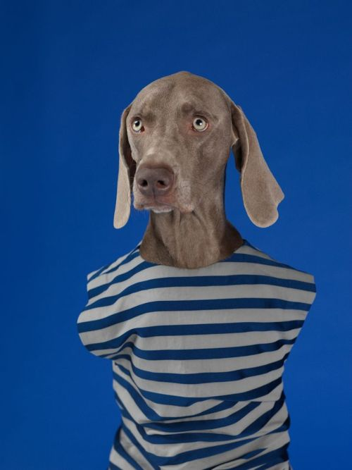 fuillook:  Acne Studios - William Wegman