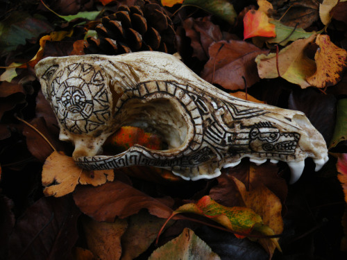 severalwaystoskinacat:   Carved coyote skull on fall leaves