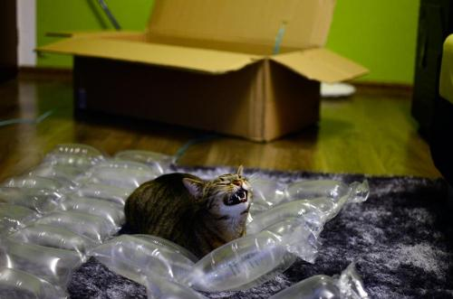 h0llow3yes:  toramorigan:  daksinakke:  funfrom4chan:  So my cat likes unpacking..  thats the happiest fucking cat ive ever seen  Aww yiss. Mother. Fucking. Air Pacs.  ^ Crying!