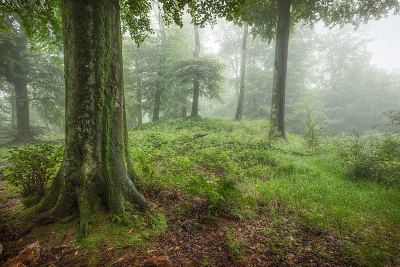 wanderthewood:  Early morning mist in Beacon wood near Shepton Mallet, Somerset, England by GrahamMcPherson