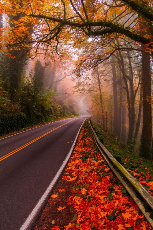 woodendreams:  Germantown Road, Portland, US (by Mandar Deshpande)